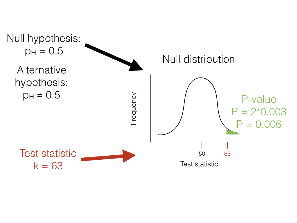 Figure 2.1. The unfair lizard. We use the null hypothesis to generate a null distribution for our test statistic, which in this case is a binomial distribution centered around 50. We then look at our test statistic and calculate the probability of obtaining a result at least as extreme as this value. Image by the author, can be reused under a CC-BY-4.0 license.
