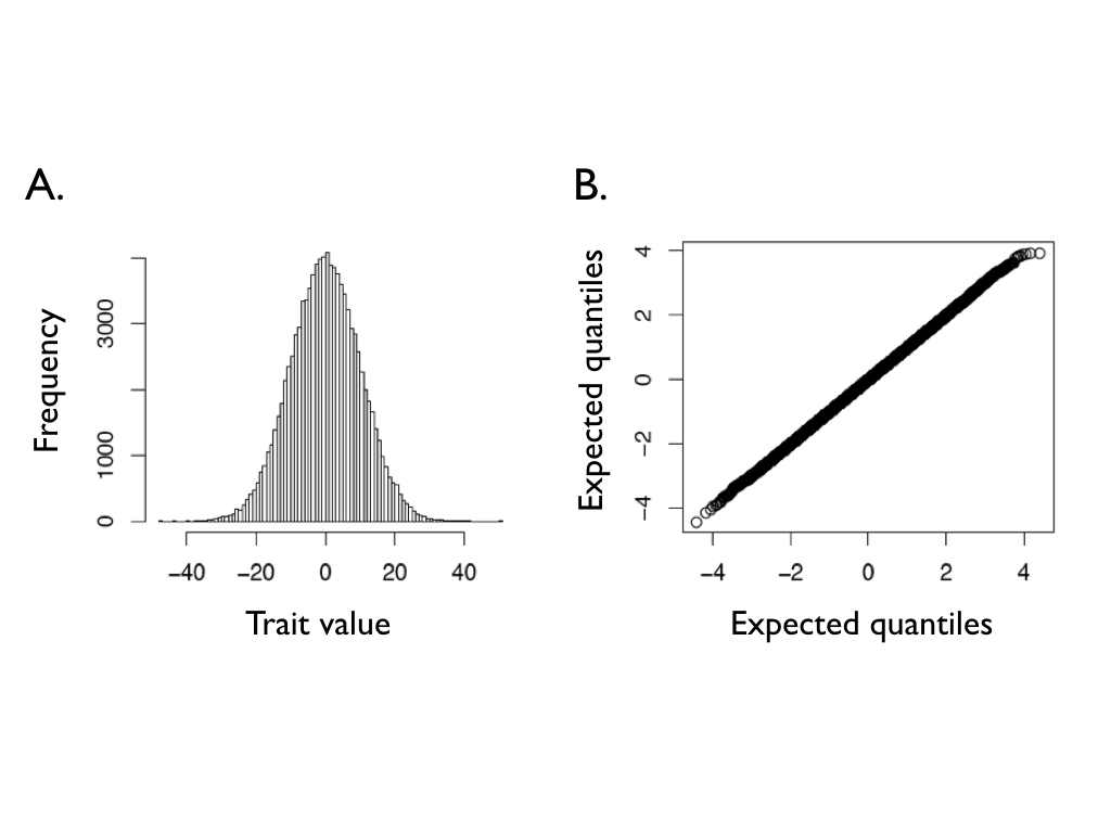 Figure 3.2. Ending character values from of 100,000 Brownian motion simulations with \bar{z}(0) = 0, t = 100, and \sigma^2 = 1. Panel (A) shows a histogram of the outcome of these simulations, while panel (B) shows a normal Q-Q plot for these data. If the data follow a normal distribution, the points in the Q-Q plot should form a straight line.