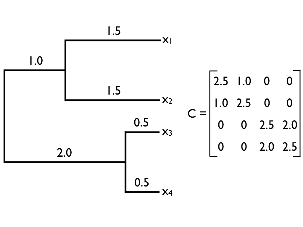 Figure 3.5. Example of a phylogenetic tree (left) and its associated phylogenetic variance-covariance matrix \mathbf{C} (right).